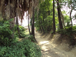 Another Road of Sohagara Village
