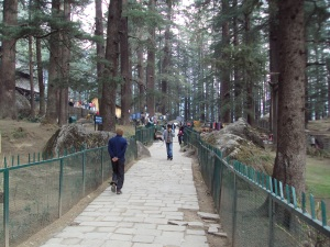 Deodar Lined Path of Hadimba Temple